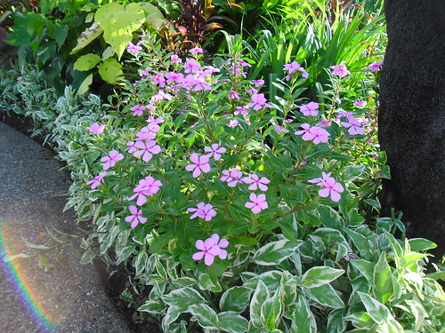 Gardens by Miss OWW