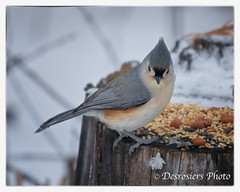 wren(0.0), sparrow(0.0), chickadee(0.0), animal(1.0), fauna(1.0), finch(1.0), bluebird(1.0), emberizidae(1.0), beak(1.0), bird(1.0),