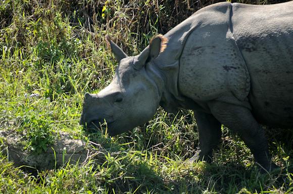 20110305-DSC_4943B-Rhino