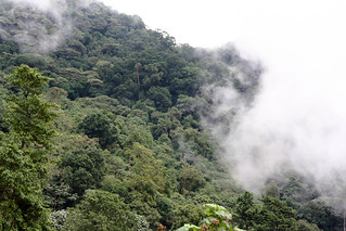 The Cloud Forest of Chicaque (Bosque de Niebla) | by The Colombian Way