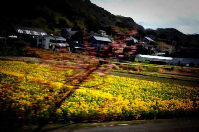 20120311_伊予ヶ岳_0035