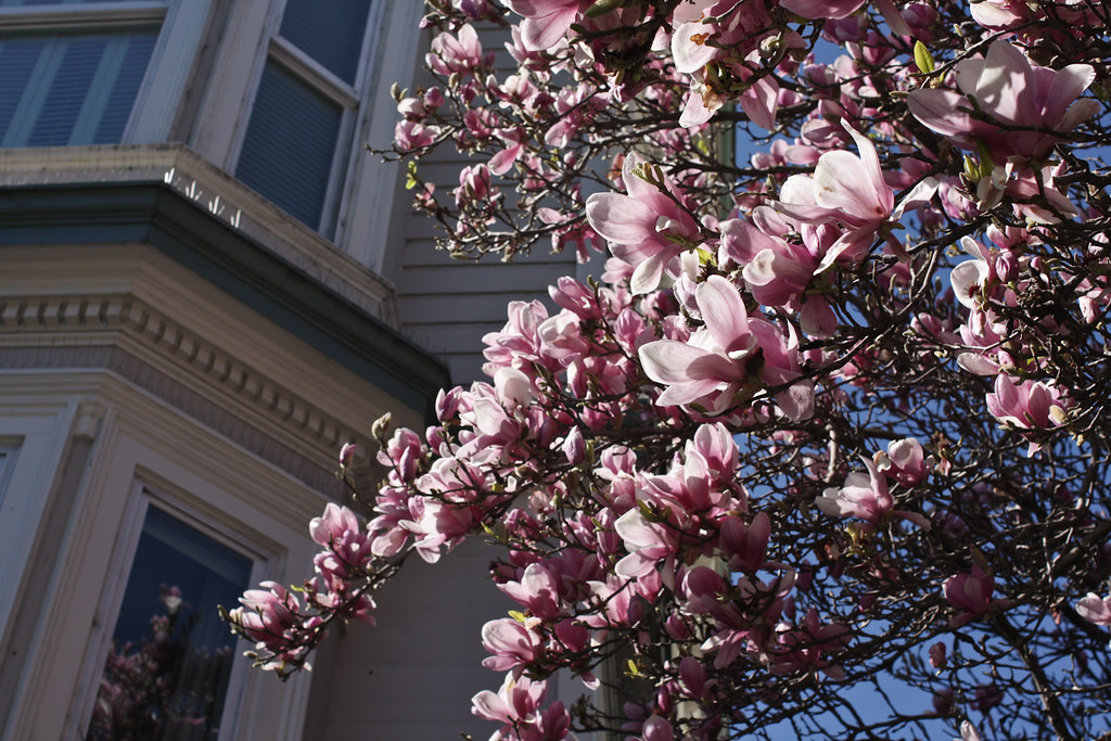 Spring in San Francisco