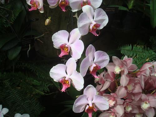 Longwood Gardens Orchid Extravaganza 2012