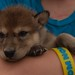 2012-04-12 Fur-Ever Wild-Wolf Cubs & other furry friend's 196