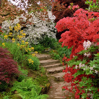 Scotney Castle Landscape Gardens, Kent, UK   Colorful azaleas line a shaded path in Spring (2 of 16)