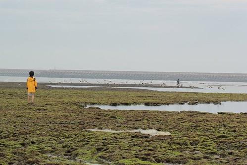 鄭明修表示,藻礁的現況意味著人類生活的環境,藻礁活不下去,子孫也活不下去。(攝影:唐永洪)