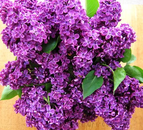 Feliz Quinta das flores!!! by sweetfelt \ ideias em feltro