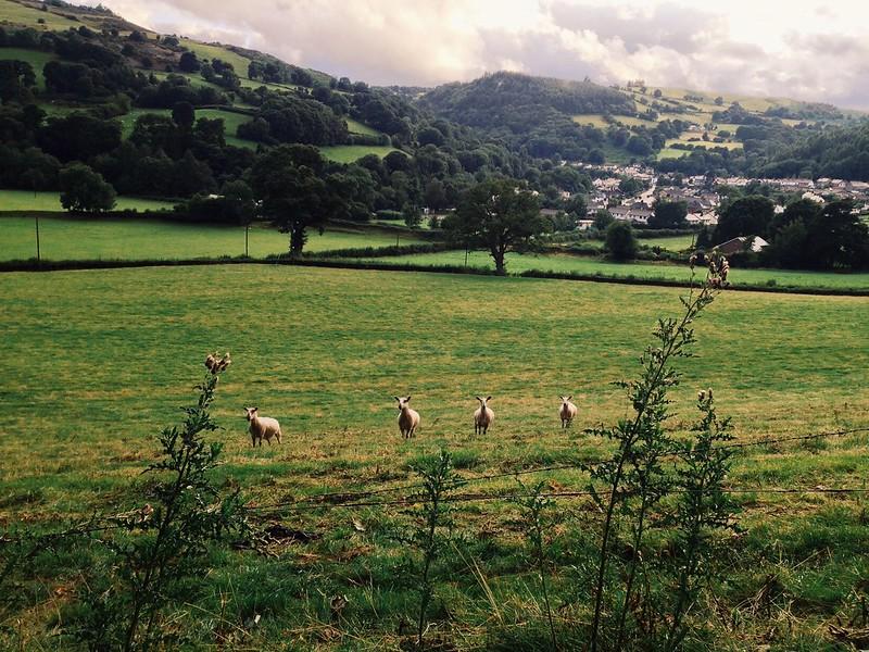 Welsh observers