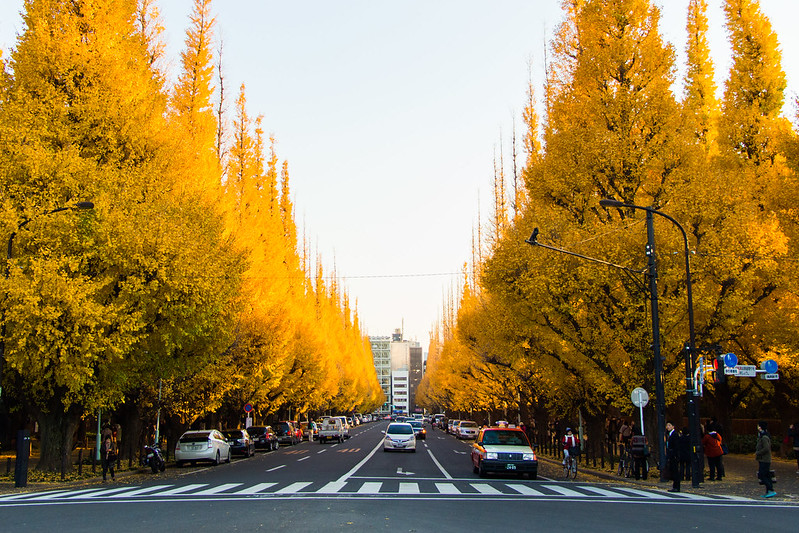 ginkgo avenue (aka icho namiki) - 1
