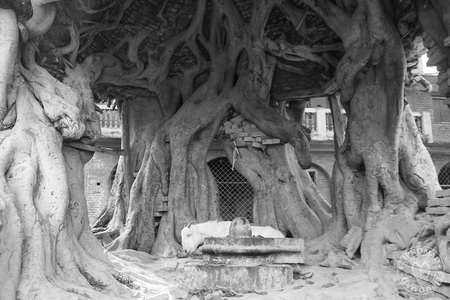 Gokarna Mahadev Temple
