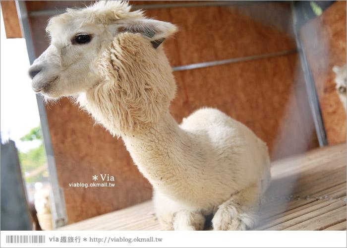 【彰化景點】克林姆莊園Cream Manor~小型動物園!戶外親子同遊好去處45