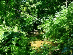 Valley Stream State Park (9)