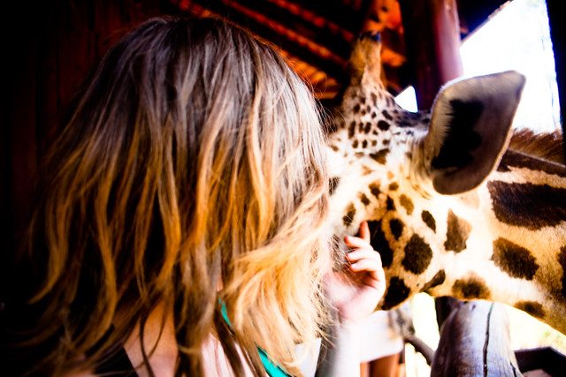 Giraffe Centre (11)