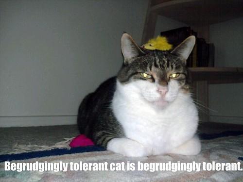 tolerant phinneas