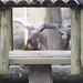 Lemur Framed