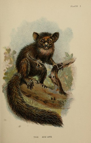 011-El Aye-Aye-A hand-book  to the primates-Volume 1-1896- Henry Ogg Forbes
