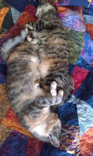 Yin/Yang kittehs