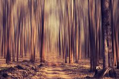 [フリー画像素材] 自然風景, 森林, 樹木 ID:201203140600