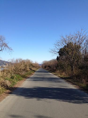 淀川の鳥獣保護区のとこの道