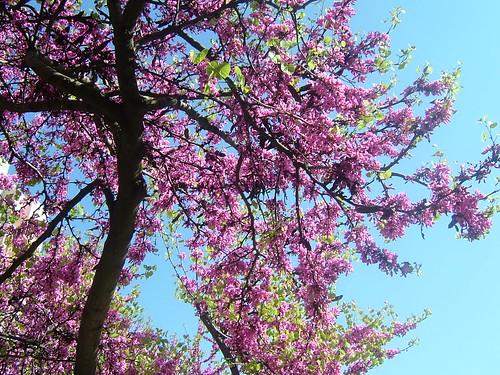Welcoming spring / Boas-vindas para a primavera