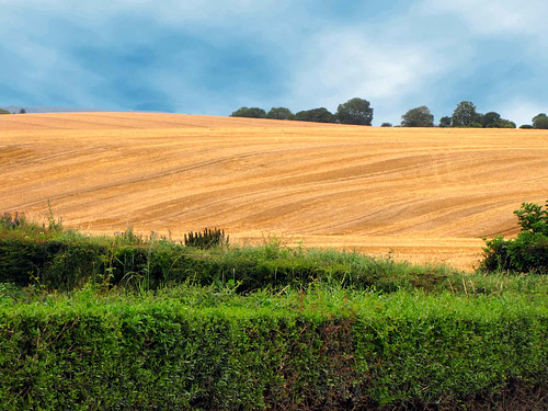 ireland wallpaper nature field yellow skyline canon landscape photography landscapes interesting view horizon irland eire powershot vegetation landschaft sx10
