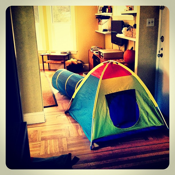 tent invasion. the things we do on cold, gray weekends.