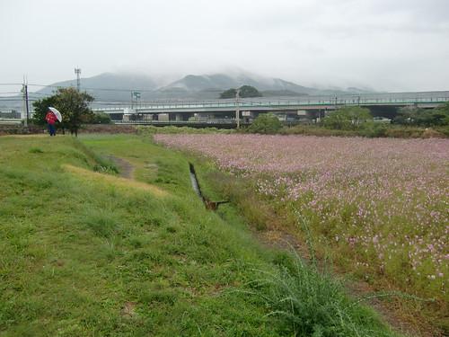泥道の先にあった花畑