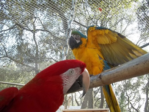 Zaksee Florida Bird Sanctuary and Parrot Rescue (48)