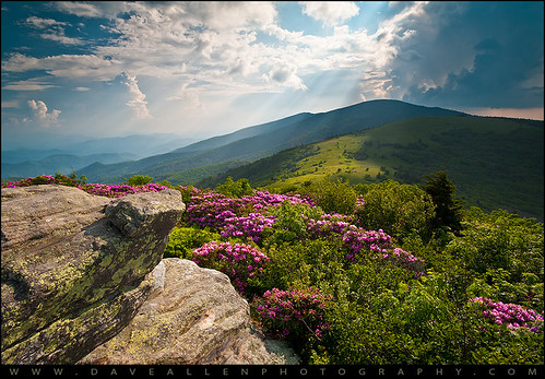 flowers light summer mountain mountains nature beauty lines outdoors nc spring highlands flora nikon tn natural hiking northcarolina wideangle adventure trail rhododendron carolina rays blooms appalachian wilderness naturalbeauty leading blueridgemountains beams sunbeams blueridge roan daveallen lightrays crepuscular 1735mm wnc westernnorthcarolina roanmountain grassybald southernappalachians d700 platinumheartaward janesbald janebald mygearandmeplatinum mygearandmediamond