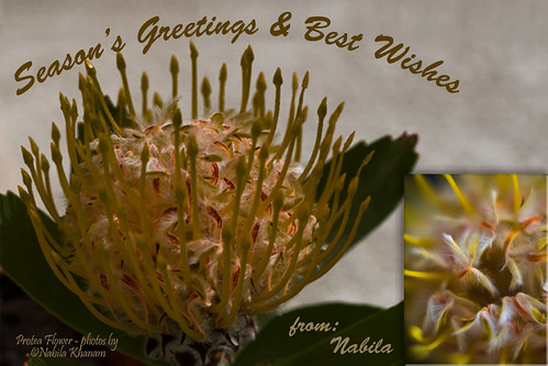 Season's Greetings - Spring 2012 by nabila4art