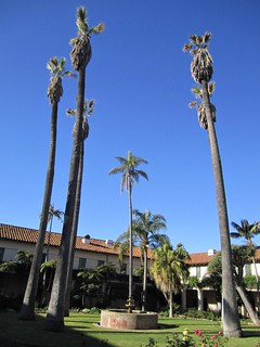 Tall palm trees in courtyard, Mission Santa Barbara