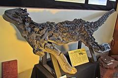 Scelidosaurus harrisonii
