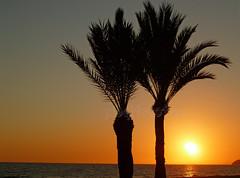 benidorm sunset palms