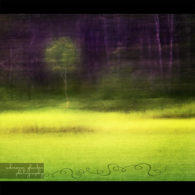 Mitchell Park ~ Impressions 2