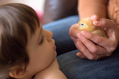 Amélie & Chick