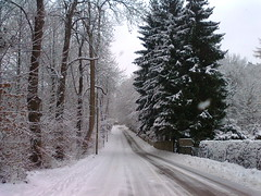 winter, tree, snow, rain and snow mixed, frost, forest, winter storm, blizzard, freezing, fir, spruce,