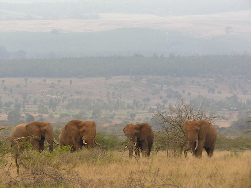 A herd of elephants stands in a field