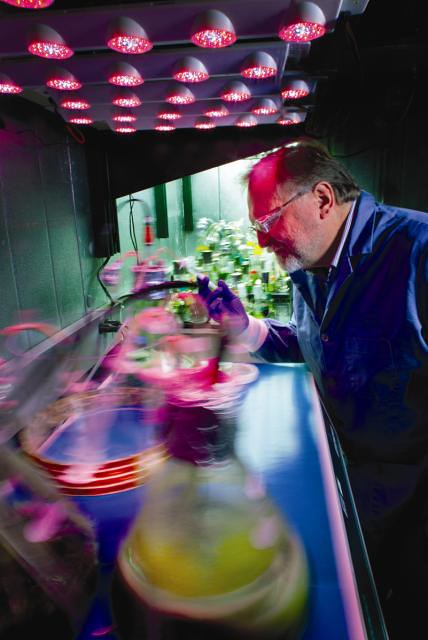 Los Alamos bioscientist Cliff Unkefer monitors algae's growth. Unke- fer and his colleague Pete Silks recently demonstrated a high-yield- ing chemical process to convert triglycerides obtained from algal lip- ids into high-energy hydrocarbon biofuels for aviation. The process removes oxygen atoms from the algal triglycerides and reforms the resulting high-molecular-weight hydrocarbons into lower-molecular- weight hydrocarbons that can vaporize and ignite quickly.