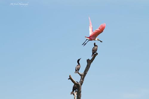 Watch the birdie.....