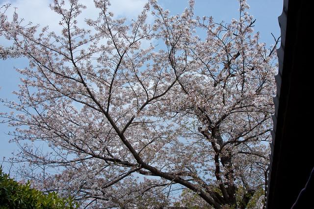 2012-kyushu-521