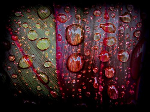 gotas de chuva by fernanda garrido