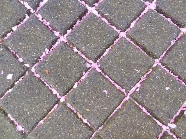 Blossoms fallen on pavement in a regular pattern