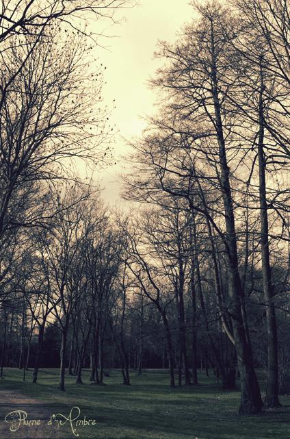 Forêt le matin