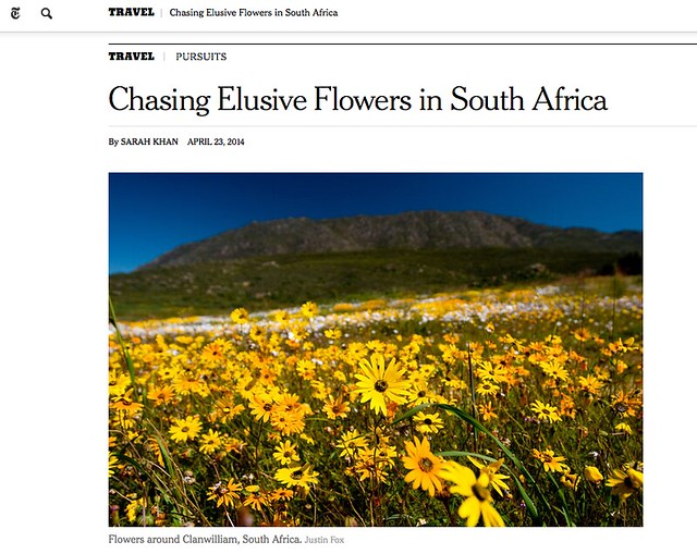 New York Times: Chasing Elusive Flowers in South Africa | By