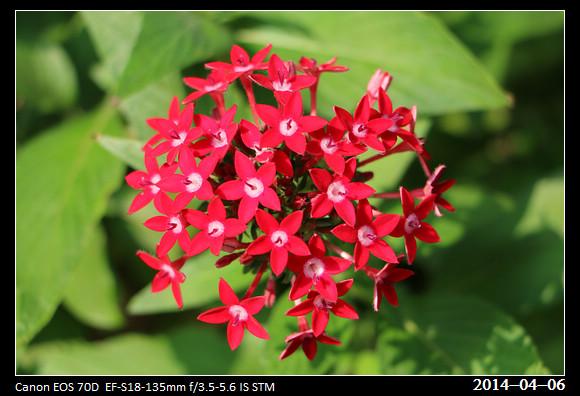 20140406_Flower