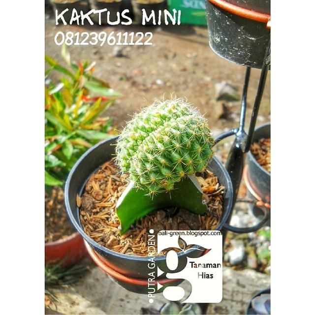 Forsale Promo Tanaman Hias Kaktus Mini Denpasar Bali