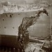HMS Broke in dry dock after the Battle of Jutland by Tyne & Wear Archives & Museums