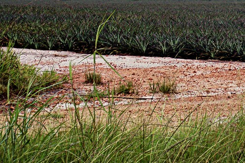 P1160676 Cropped Dirt