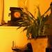 2012-03 orkideak-3