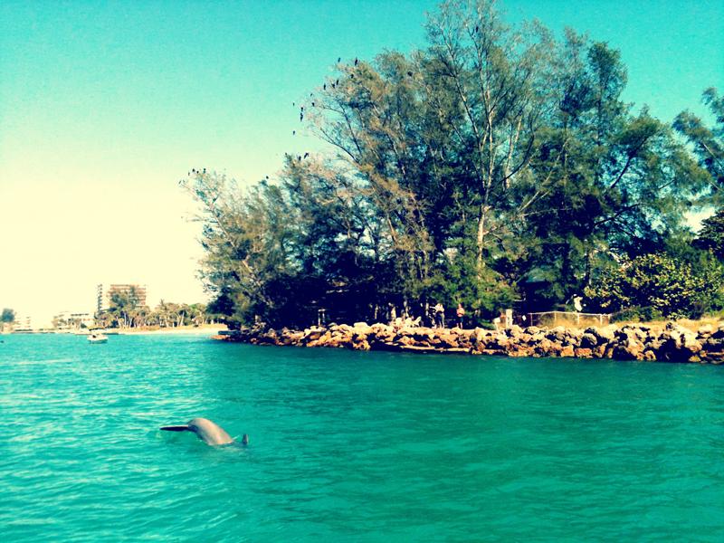 dolphbirds2